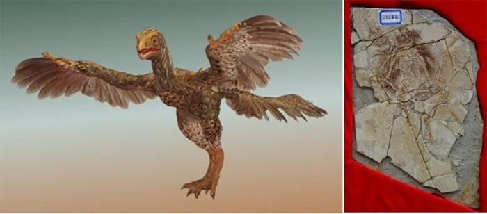 Piltdaunska ptica