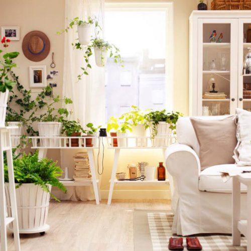 Možda imate nesanicu zbog pogrešne biljke u stanu