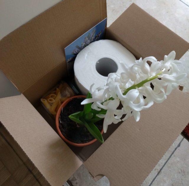 Komšijska dobrodošlica, s toalet-papirom i saksijom