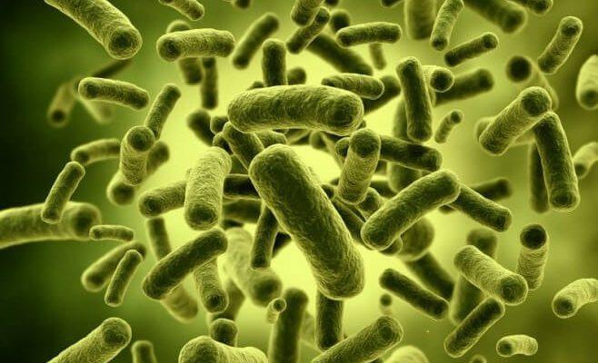 6 pitanja i 6 odgovora u vezi s probioticima