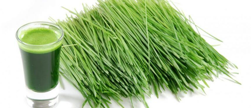 Pšenična trava