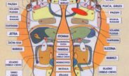 Refleksologija – mapa organa na tabanima